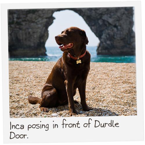 Dorset-14